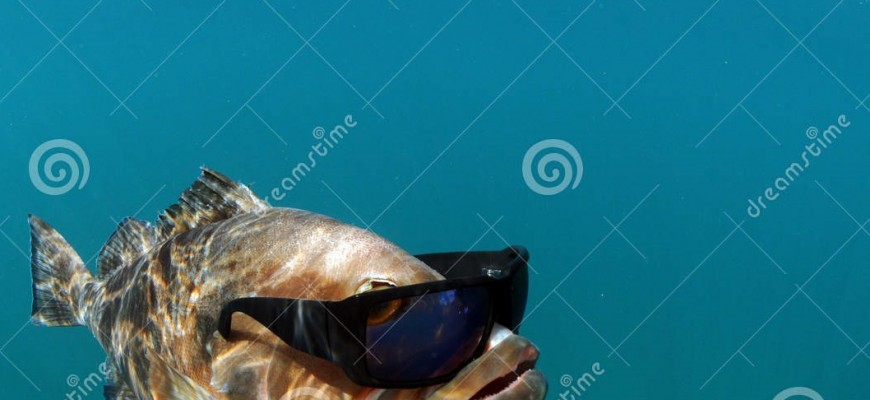 http://www.dreamstime.com/stock-photos-cool-fish-wearing-sunglasses-image25314593