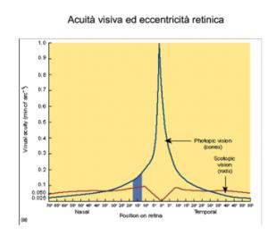 acuità visiva ed eccentricità retinica